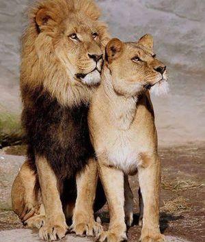 Любовный гороскоп для Льва на 2020 год