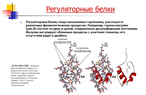Функции белков в организме человека. Таблица с примерами для спортсмена, бодибилдера, питание