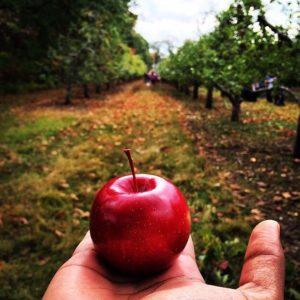 Яблочный Спас 19 августа- праздник лета и Преображения Господня