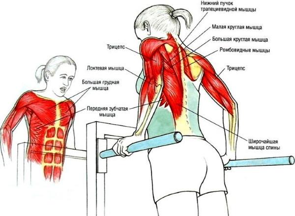 Тренировка на грудные мышцы для девушек в тренажерном зале, домашних условиях