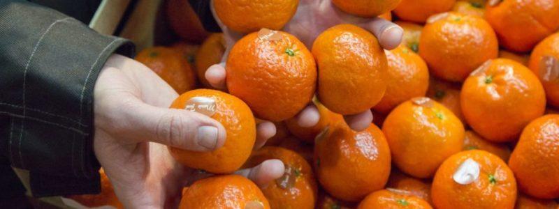 Чем может обернуться переедание мандаринов