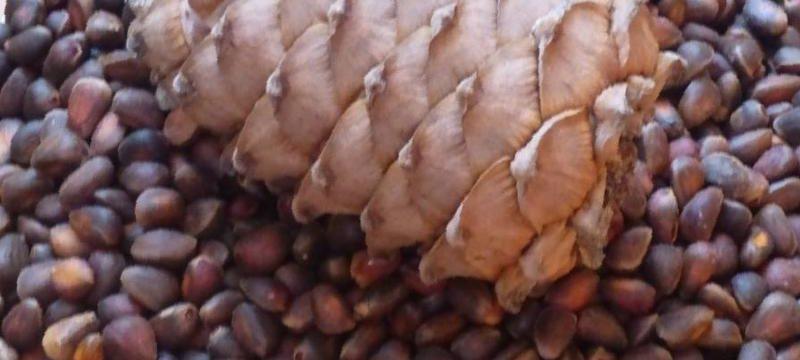 Как долго можно хранить очищенные орехи и в скорлупе в домашних условиях